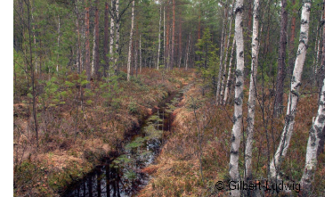 drainage ditch in forest
