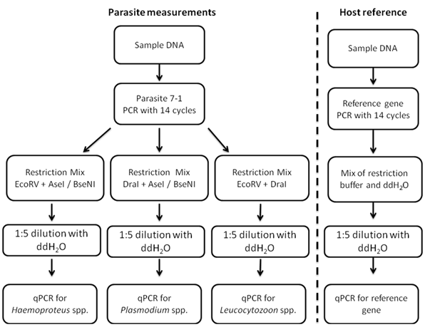 A workflow of the working nested qPCR